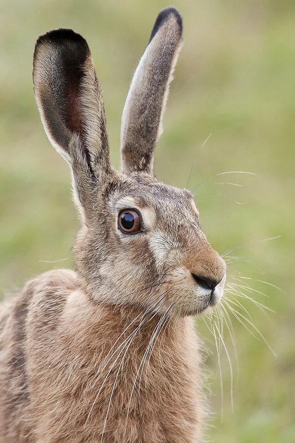 Hare, Go Be Wild