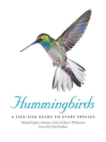 Hummingbirds: a stunning book reviewed by Barbara Copperthwaite