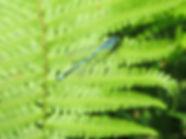 Common blue damselfly, Barbara Copperthwaite, Go Be Wild
