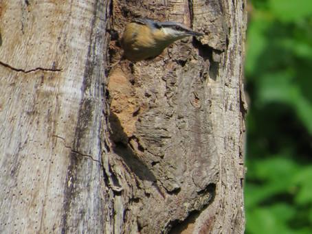 Parakeets and pals