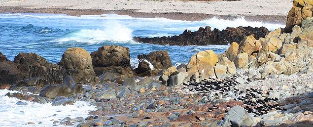 Alderney Clonque Bay cpt Martin Batt.jpg