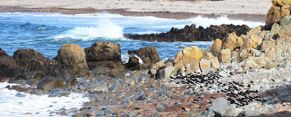 Alderney Clonque Bay, by Martin Batt, Go Be Wild