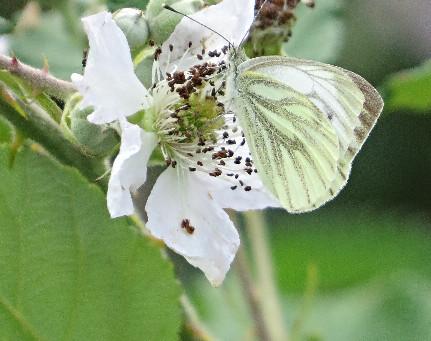 Butterflies...& impressive thighs!
