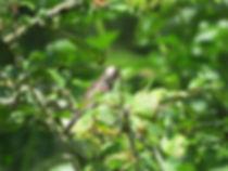 juvenile long-tailed tit, Go Be Wild, Barbara Copperthwaite
