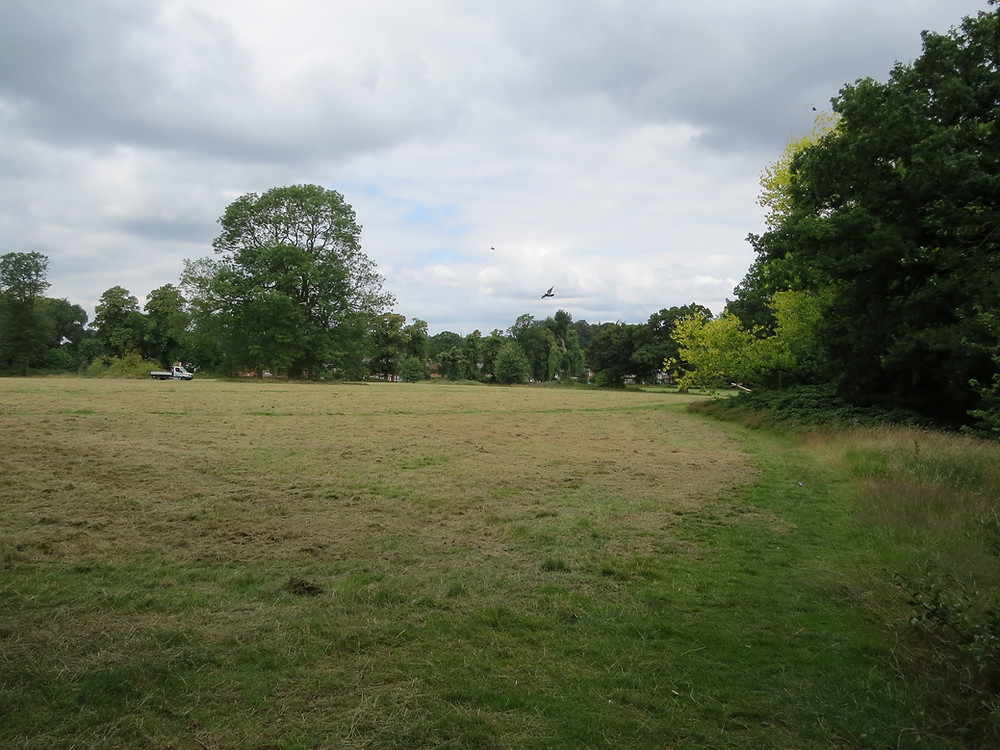 Once lush, the large meadow has been cut too early