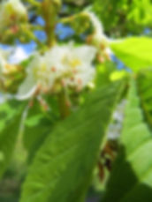 Flower of a horse chestnut candle, by Barbara Copperthwaite, Go Be Wild