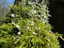 Lichen, Go Be Wild, Barbara Copperthwaite