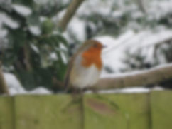 Robin in the snow, Go Be Wild, Barbara Copperthwaite
