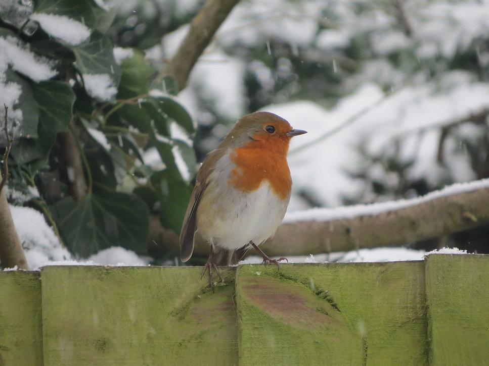 Robin in the snow, Go Be Wild, Barbara Copperthwaite