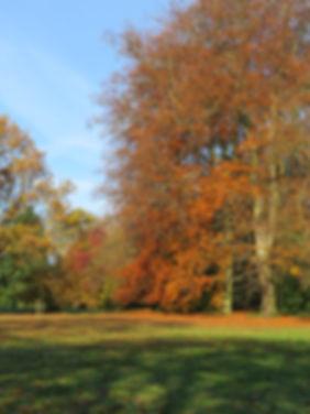 Fiery autumn, by Barbara Copperthwaite, Go Be Wild