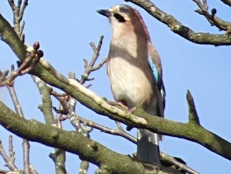 The Jay: From secretive to show-off