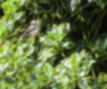 Long-tailed tit, Go Be Wild, Barbara Copperthwaite