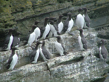 Cardigan Island, picture courtesy of Wildlife Trusts