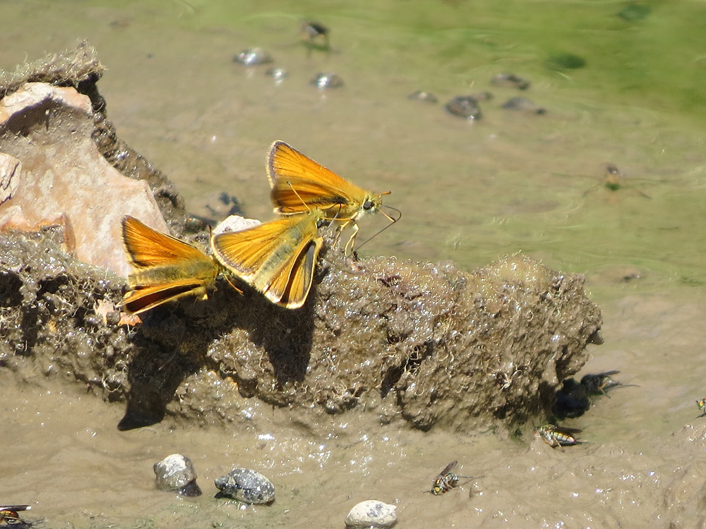 Small Skippers, Barbara Copperthwaite, Go Be Wild