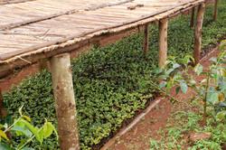 Jungpflanzen Beet
