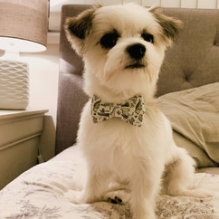 Wearing the You're Rawsome Collar & Bow-tie