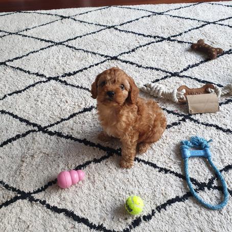Jasper's Adventures!