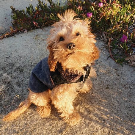 Pup Style Advice