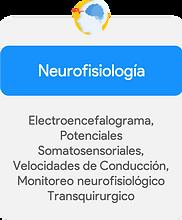 Neurofisiología.png