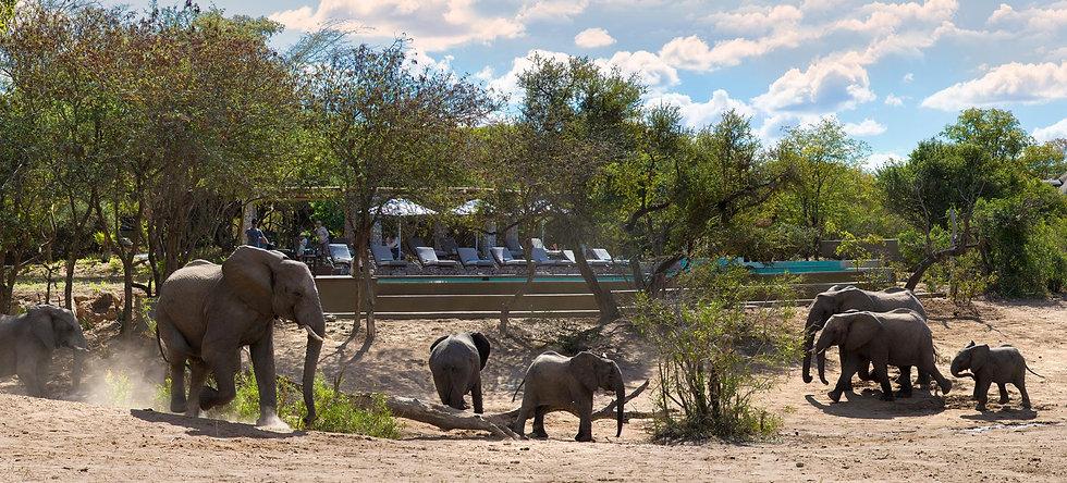 ngala safari lodge pool setting