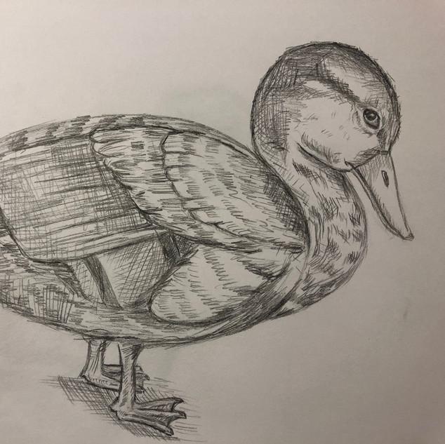 mama duck.jpg