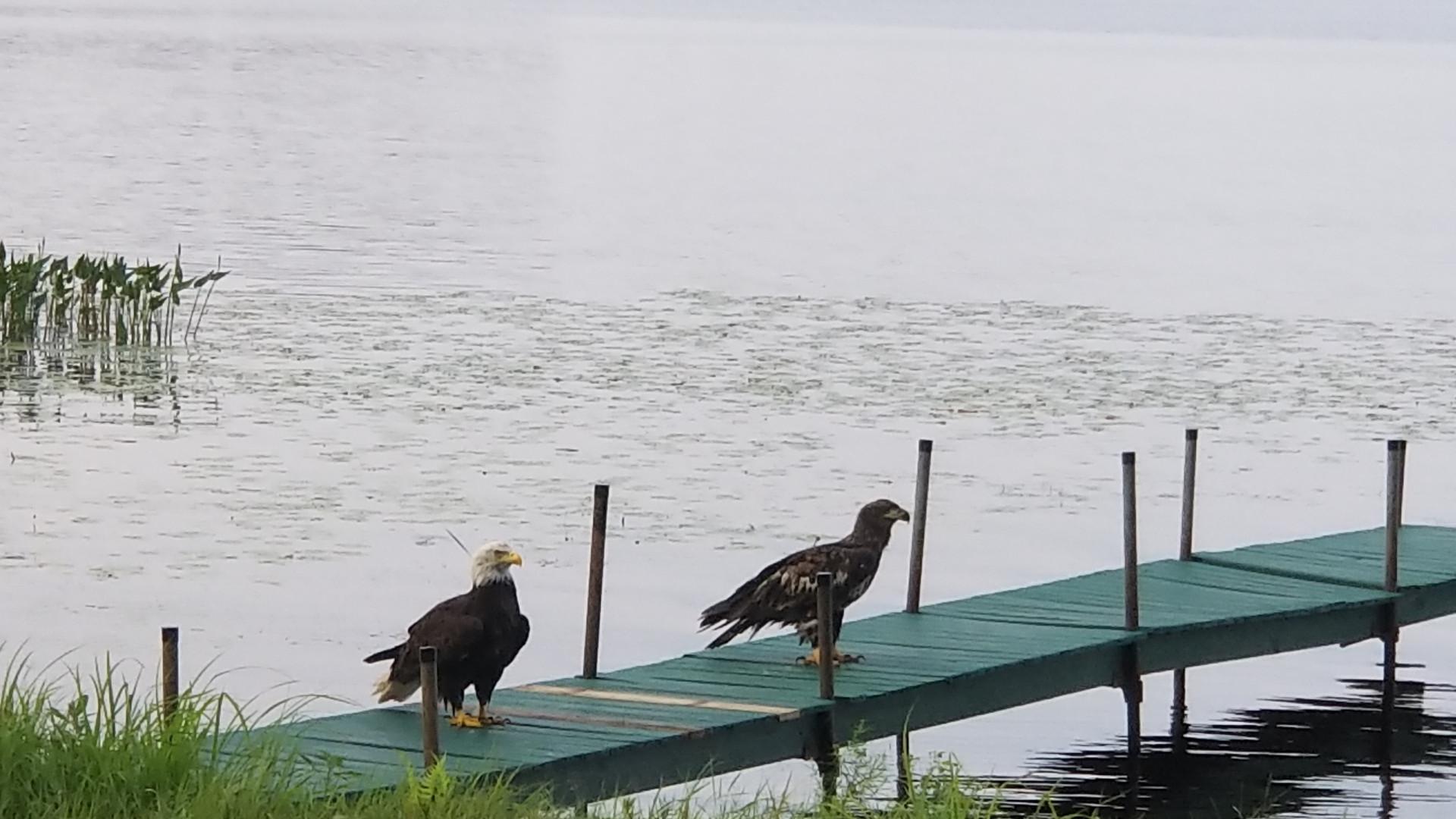 Eagles on Pier