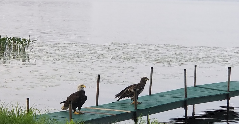 Eagles on Pier