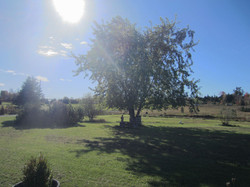 belnan trees and lawn