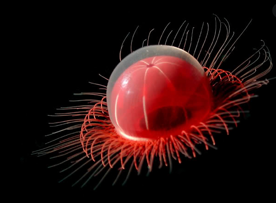 Nightmarish Deepsea Discoveries