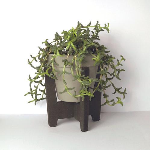 Planten standaard
