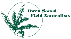 OSFN logo