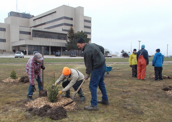 People planting spruces
