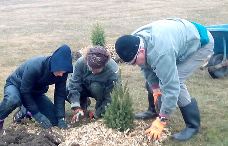 Team effort to plant a tree