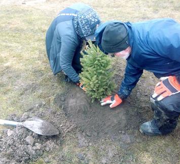 Team effort planting trees