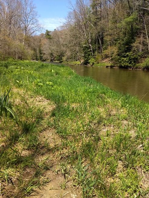 Creek at Hellbender.jpg