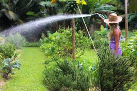 Proper Watering: Techniques & Conservation by utilizing rain water