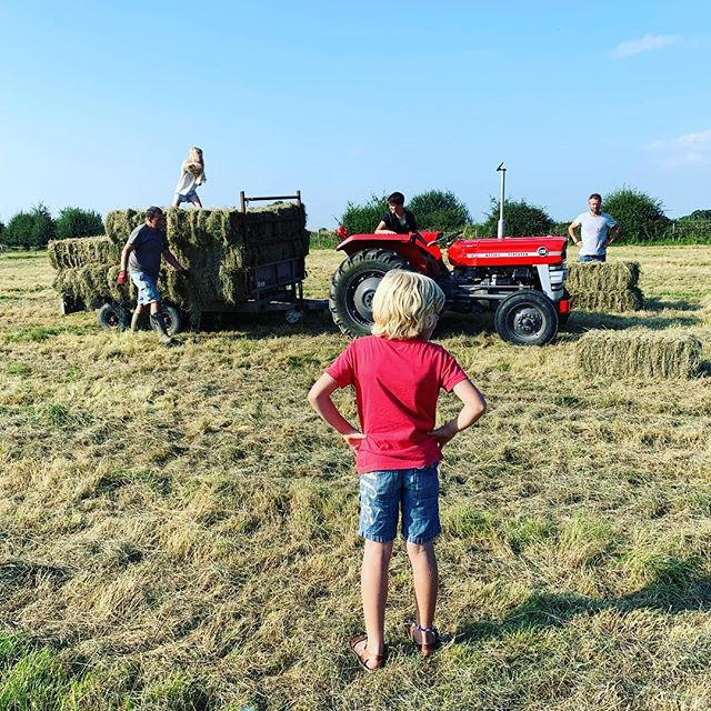 Busy getting the hay in...
