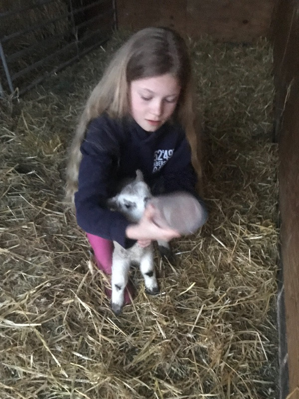 Lambing in full swing