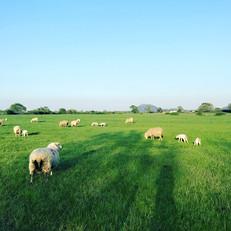 Views from farm