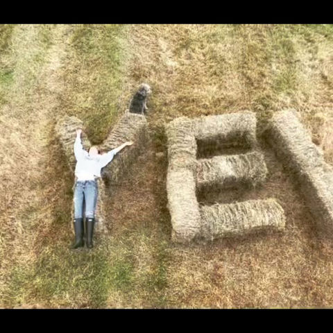 Making hay at yew tree farm