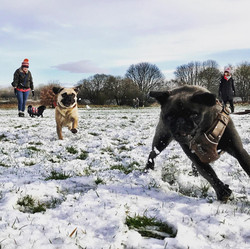 Dog adventures whatever the weather