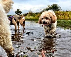 Small dog adventures