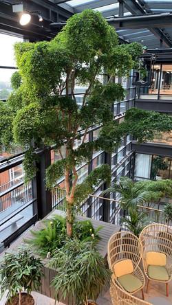 stora träd in i T30/Urban Escape