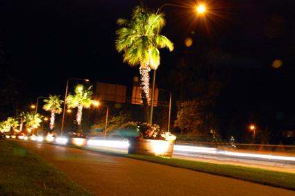 Trelleborg, nya palmer