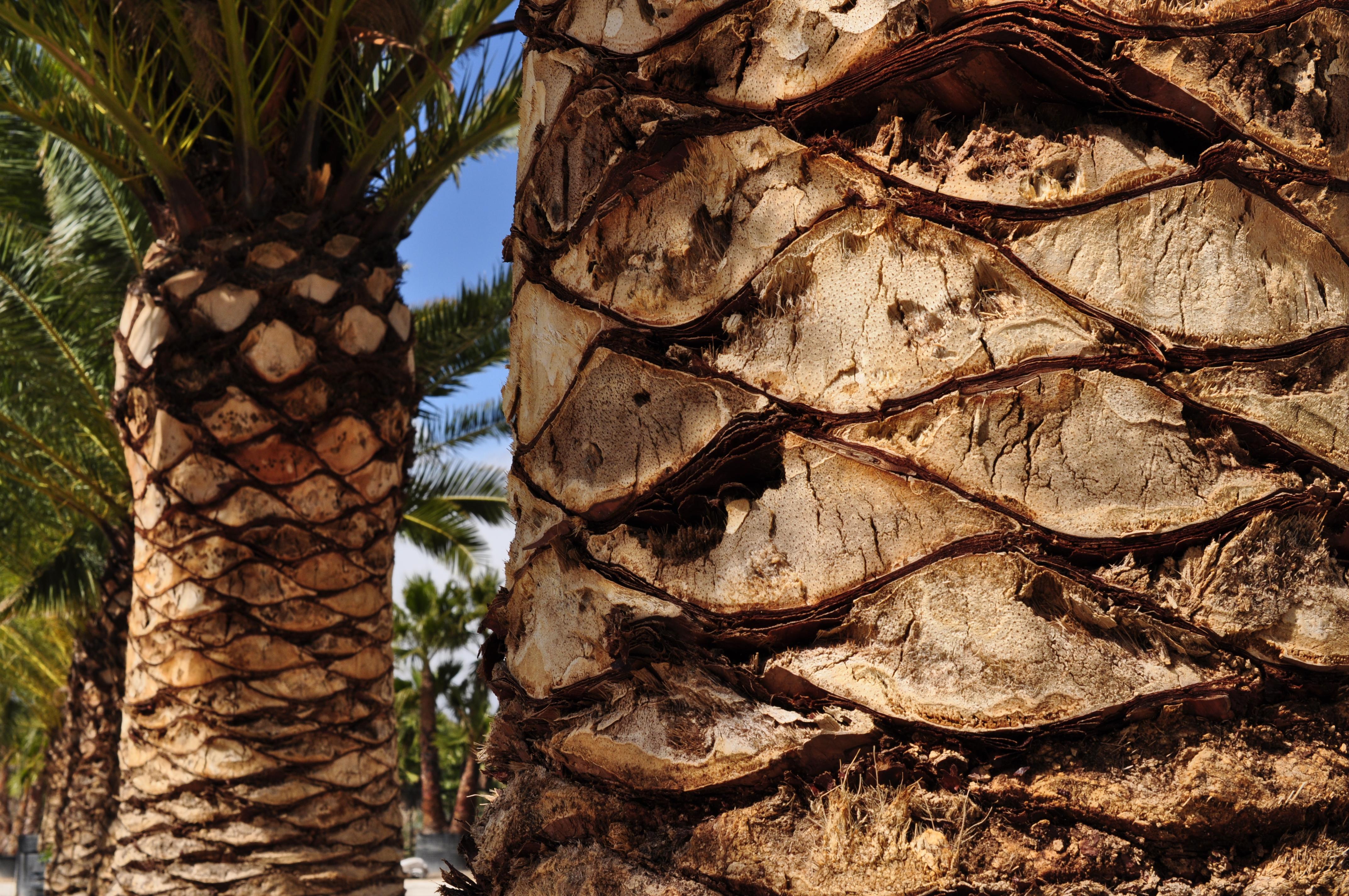 nr1 på palmer