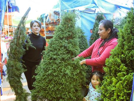 Pino de Navidad Natural: Una opción sustentable para decorar