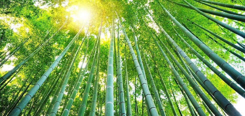 GGI_Bamboo_cropped.jpg