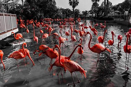 PORTA H FLORIDA.jpg