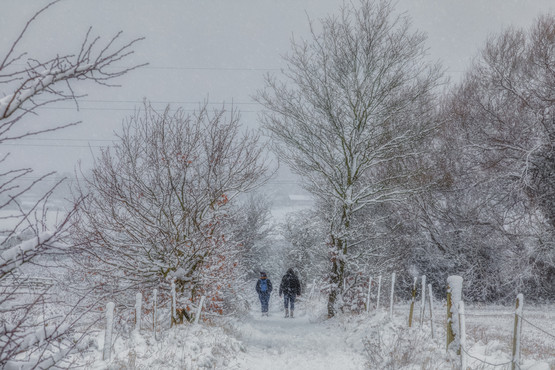 Wintry Woodland Walk