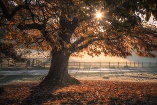 Magical Autumn Tree No 4.jpg